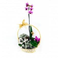 Градина в кошница