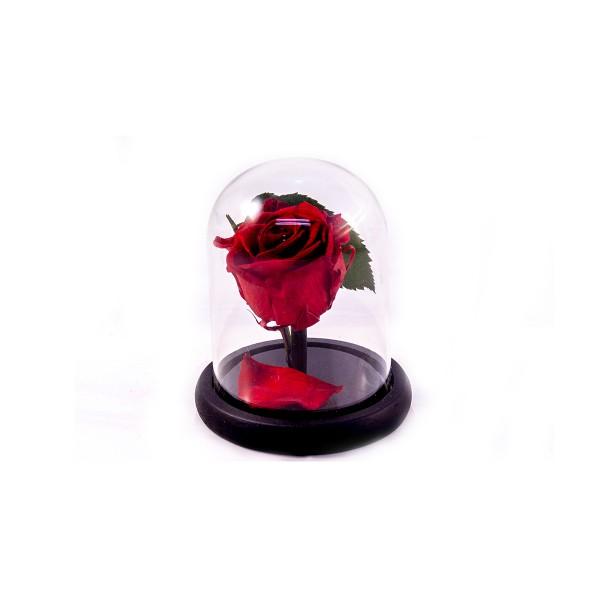 Вечна роза размер малък цвят Червен